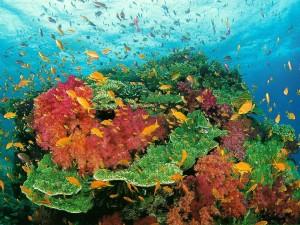CoralSeaReef
