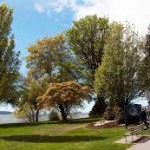 Common Spring Tree Pollen Allergies in Vancouver
