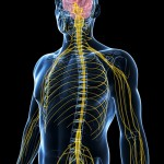 MS: Multiple Sclerosis Treatment