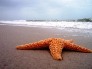starfish-beach-anna-garbis-300x224